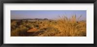 Framed Grass growing in a desert, Namib Rand Nature Reserve, Namib Desert, Namibia