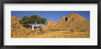 Framed Tree in the Namib Desert, Namibia