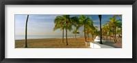 Framed Palm trees on the beach, Las Olas Boulevard, Fort Lauderdale, Florida, USA