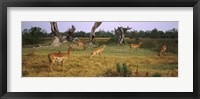 Framed Herd of impalas (Aepyceros Melampus) grazing in a field, Moremi Wildlife Reserve, Botswana