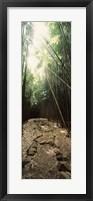 Framed Stone path through a Bamboo forest, Oheo Gulch, Seven Sacred Pools, Hana, Maui, Hawaii, USA