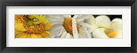 Framed Yellow and white flowers