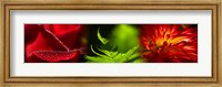 Framed Leaves and red flowers