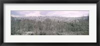 Framed Snow covered forest, Kentucky, USA