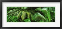 Framed Palm fronds and green vegetation, Seychelles