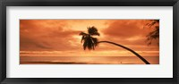 Framed Silhouette of an old palm tree on the beach at sunset, Aitutaki, Cook Islands