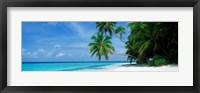 Framed Palm trees on the beach, Fihalhohi Island, Maldives
