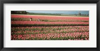 Framed Mother and daughters in field of red tulips, Alkmaar, Netherlands