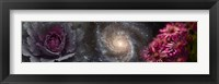 Framed Cabbage with galaxy and pink flowers