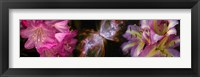 Framed Butterfly nebula with iris and pink flowers