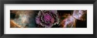 Framed Cabbage with butterfly nebula