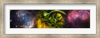 Framed Sunflower in the Hubble cosmos