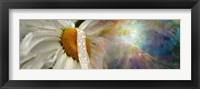 Framed Daisy with Hubble cosmos