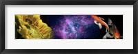 Framed Sunflower and Koi Carp in space