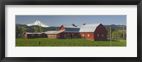 Framed Barns in field with mountains in the background, Mt Hood, The Dalles, Oregon, USA