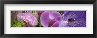 Framed Details of violet orchid flowers