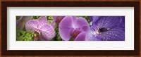 Framed Details of violet orchid flowers