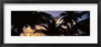 Framed Silhouette of palm trees at sunset, Aitutaki, Cook Islands