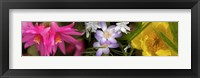 Framed Flowers in pastel colors