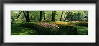 Framed Tulip flowers and trees in Keukenhof Gardens, Lisse, South Holland, Netherlands