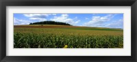 Framed Field Of Corn With Tractor In Distance, Carroll County, Maryland, USA