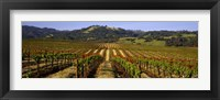 Framed Vineyard, Geyserville, California