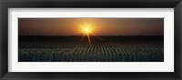Framed Sunrise, Crops, Farm, Sacramento, California, USA