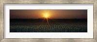 Framed Sunrise, Crops, Farm, Sacramento, California, USA