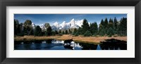 Framed Moose & Beaver Pond Grand Teton National Park WY USA