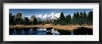 Framed Moose & Beaver Pond Grand Teton National Park WY USA