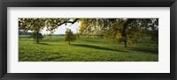 Framed Trees In A Field, Aargau, Switzerland