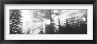 Framed Road, Redwoods Park, California, USA