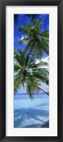 Framed Maldives Palm Trees
