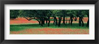 Framed Indian Paintbrushes And Scattered Oaks, Texas Hill Co, Texas, USA