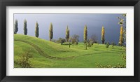 Framed Switzerland, Lake Zug, View of a row of Poplar Trees