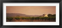 Framed Trees In A Vineyards, Napa Valley, California, USA