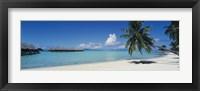Framed Palm Tree On The Beach, Moana Beach, Bora Bora, Tahiti, French Polynesia