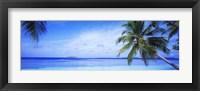 Framed Ocean, Island, Water, Palm Trees, Maldives