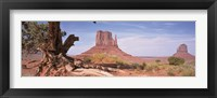 Framed Close-Up Of A Gnarled Tree With West And East Mitten, Monument Valley, Arizona, USA,