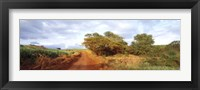 Framed Dirt road passing through a agricultural field, Kauai, Hawaii, USA