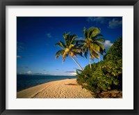 Framed Palm trees and beach, Tahiti French Polynesia