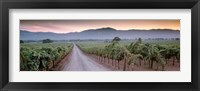 Framed Road in a vineyard, Napa Valley, California, USA