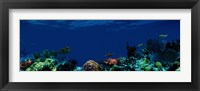 Framed Underwater