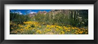 Framed Flowers in a field, Organ Pipe Cactus National Monument, Arizona, USA
