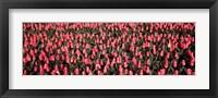 Framed Tulips, Noordbeemster, Netherlands