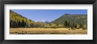 Framed Trees on the mountainside, Kachina Peaks Wilderness, Flagstaff, Arizona, USA