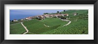 Framed Vineyards overlooking Lake Geneva, Switzerland