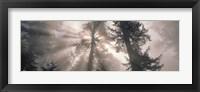 Framed Trees Redwood National Park, California, USA