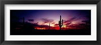 Framed Silhouette of Saguaro cactus (Carnegiea gigantea), Saguaro National Monument, Arizona, USA