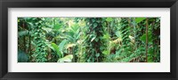 Framed Vegetation Seychelles